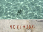 no diving sign egypt