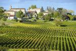 Vineyards Bordeaux Saint-Emilion