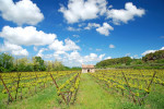 Winegrowing in the Alsace