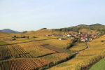 France Alsatian village in the vineyard