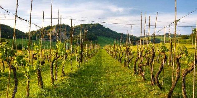 landscape in Marche