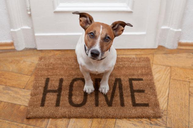 Pet dog at home